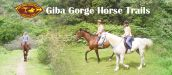 GIBA GORGE HORSE TRAILS - PINETOWN